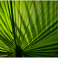"""Palm Leaves"", Essen, Germany, 2015"